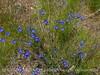Blue Flax, DINO CO