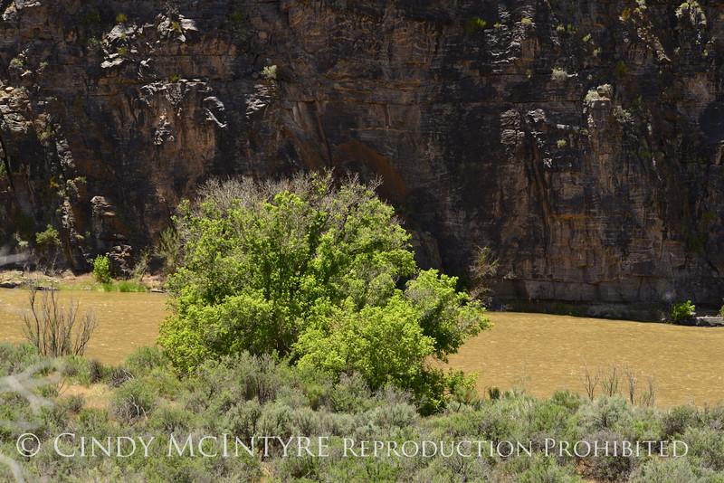 Gates of Lodore, DINO CO (6)