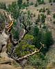 Canyon Overlook picnic area, DINO CO (1) copy 2