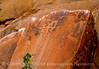 Petroglyphs, Deluge Shelter, Jones Hole, DINO UT (4)