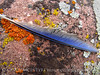 Mountain bluebird feather on lichen rock, DINO CO (6)