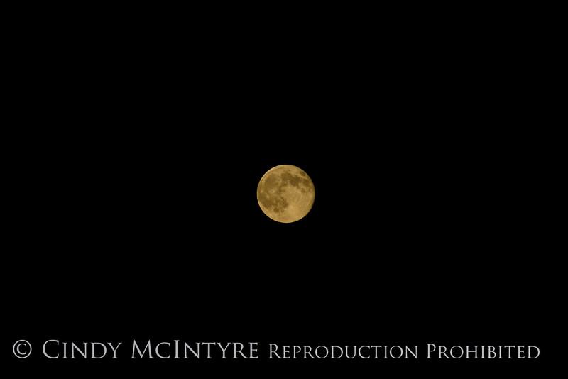 Super Moon, 7-12-14, DINO CO (22)