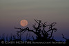Moonset 7-12-14 DINO CO (3)