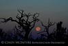 Moonset 7-12-14 DINO CO (1)