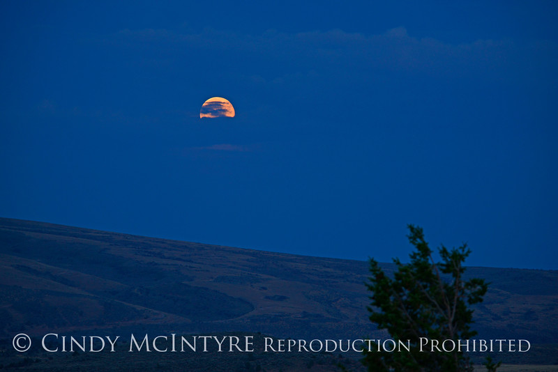 Moonrise, Canyon Overlook, DINO CO (4)