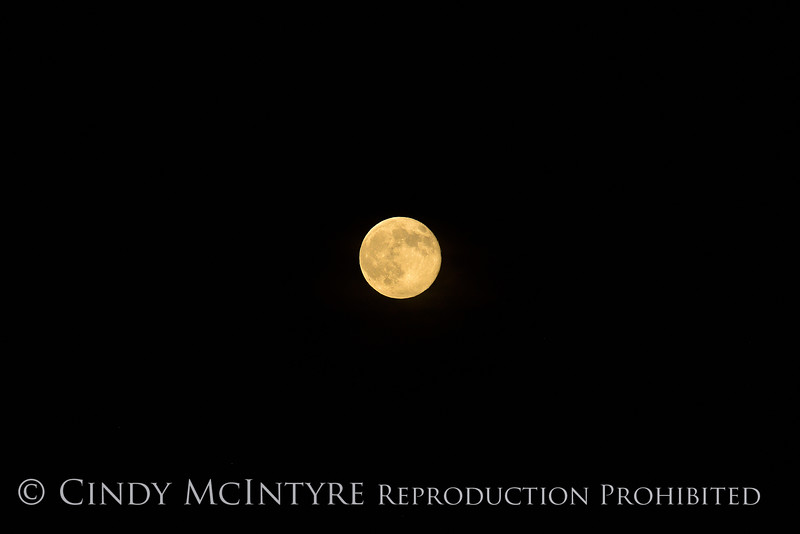 Super Moon, 7-12-14, DINO CO (12)