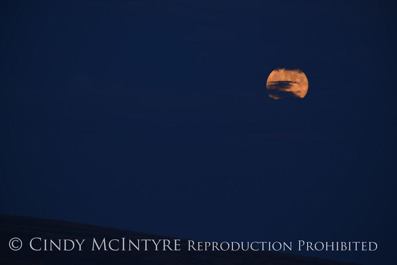Moonrise, Canyon Overlook, DINO CO (7)