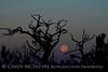 Moonset 7-12-14 DINO CO (2)