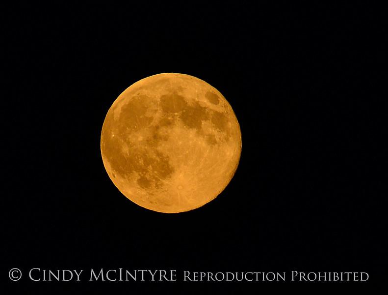 Full Moon rising, DINO CO