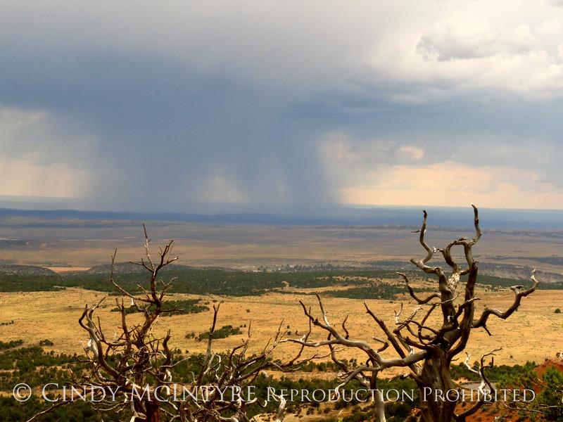 Rain Showers and Sunbeams, DINO CO (7)