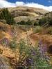 Sound of Silence trail, DINO UTAH (11)