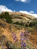 Lupine and Sound of Silence Trail, DINO CO (3)