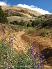 Sound of Silence trail, DINO UTAH (4)