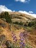 Lupine and Sound of Silence Trail, DINO CO (4)