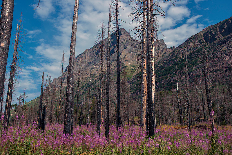 St Mary lake, burned trees from 2015 fire