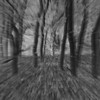 Trees at Light Speed B&W