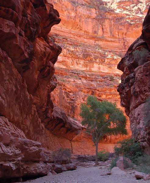 West Rim trail to Havasu Falls