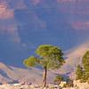 Lone Tree ( South Rim )