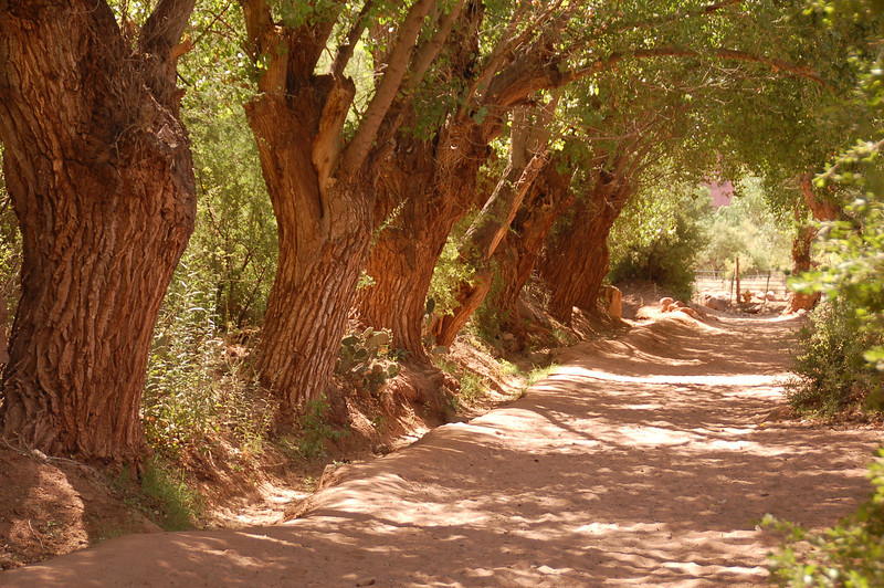 Trail on edge of Havasupi Reservation