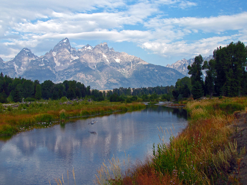 One of my favorite shots of the Tetons and the reflections at Schwabacher, plus a Heron coming in for a landing.