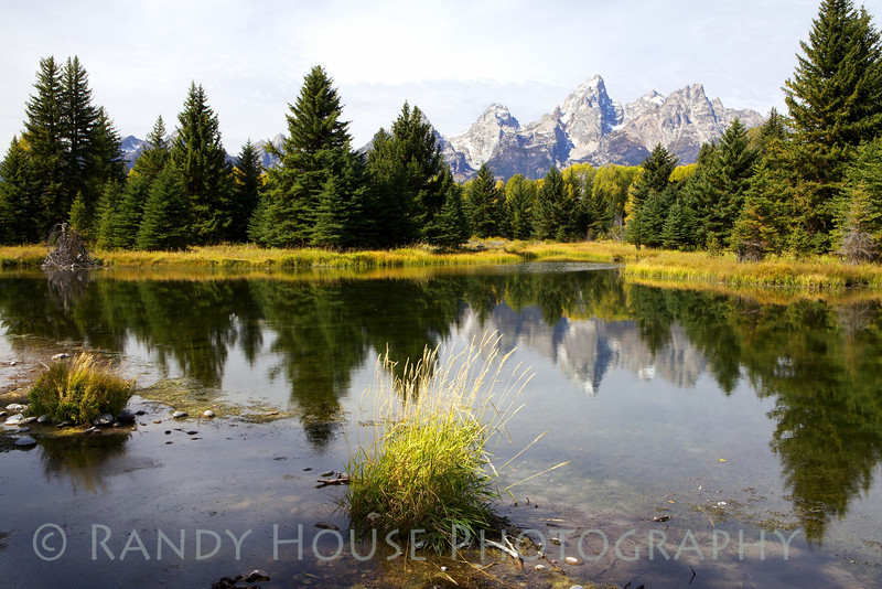 Looking across the beaver ponds at Schwabacher Landing