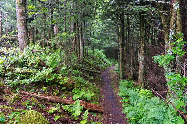 The Boulevard Trail - Great Smokey Mountains National Park - TN-6