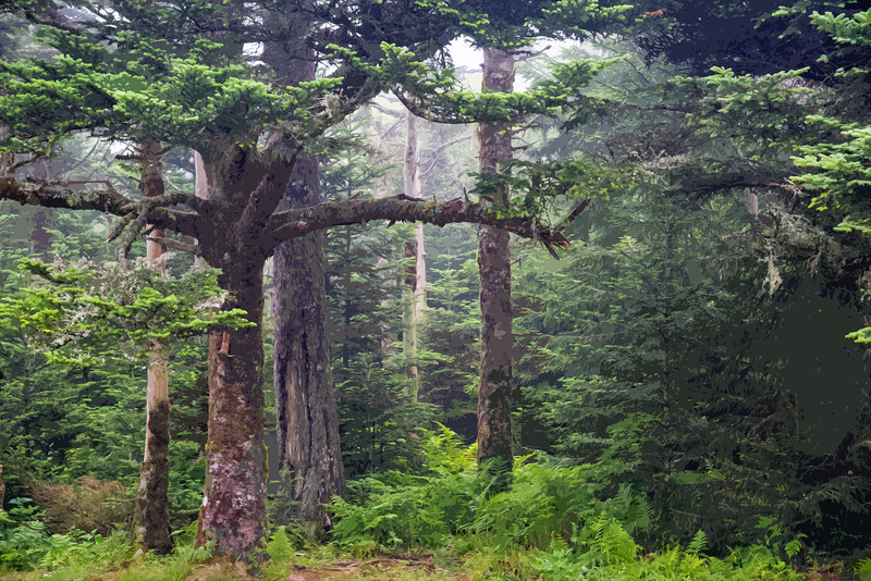 Mount Leconte Summit - Great Smokey Mountains National Park - TN Cutout