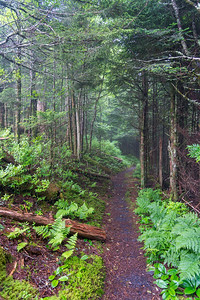 The Boulevard Trail - Great Smokey Mountains National Park - TN-7