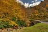 Fall At Newfound Gap Road