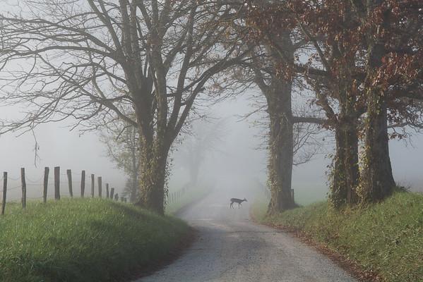 Deer In The Fog, Crossing At Hyatt Lane