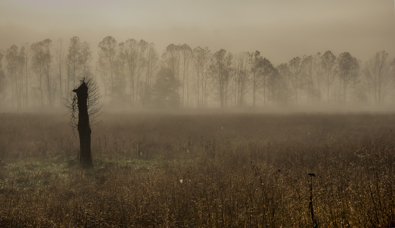 Foggy Morning at Cades Cove
