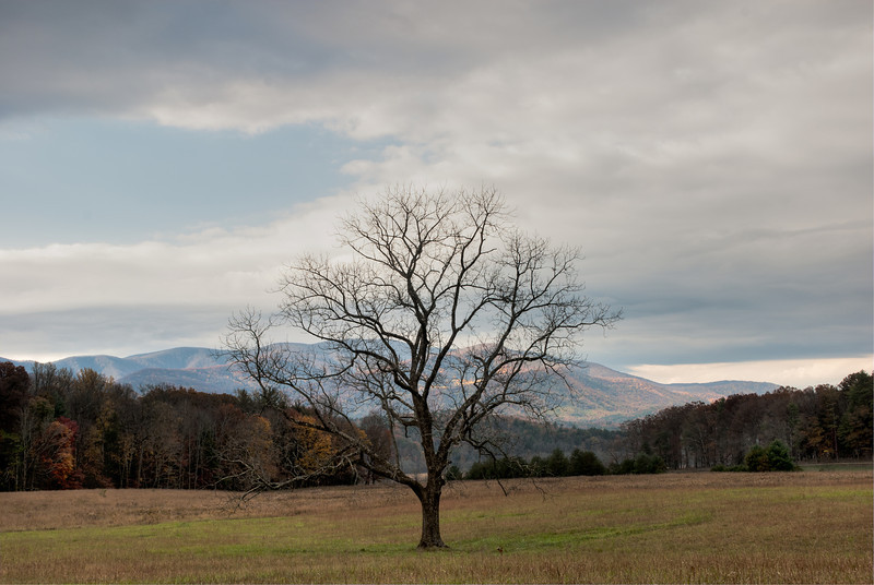 Bare Tree in Cades Cove