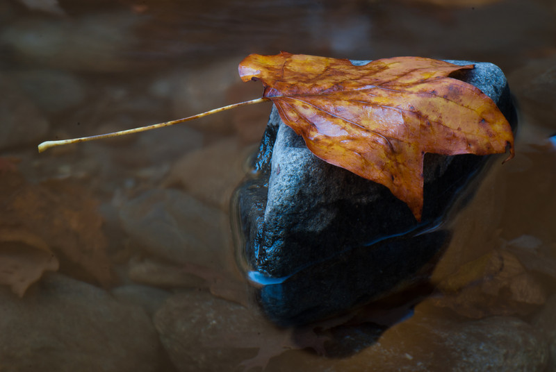 Leaf_on__Rock