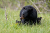 Mama Bear with Cubs-1