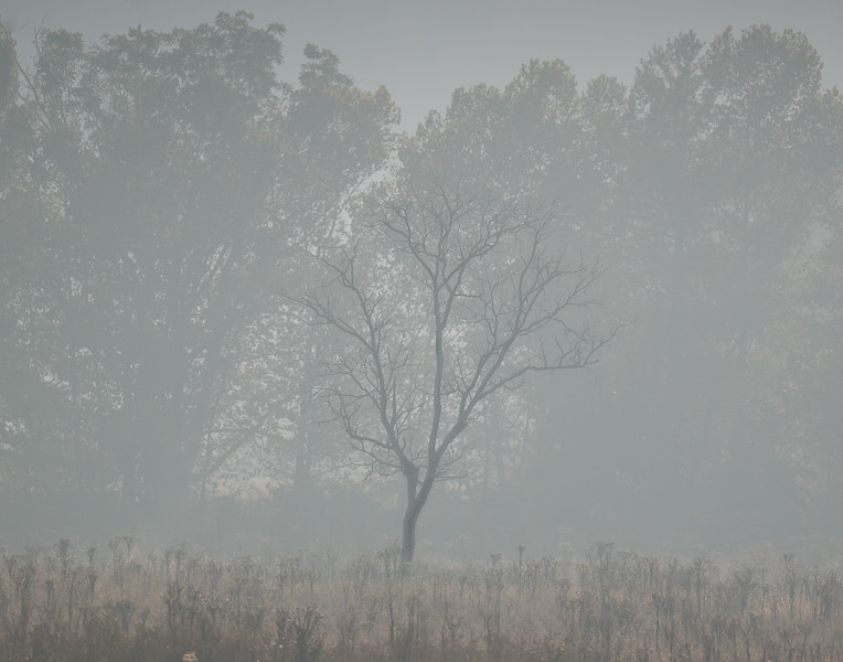 Eerie Tree At Cade's Cove