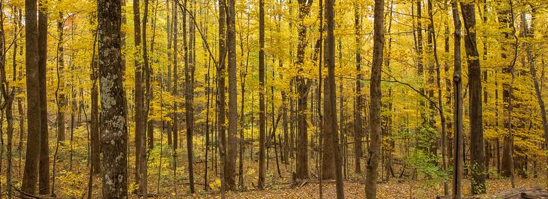 Laurel Creek Road Autumn Trees