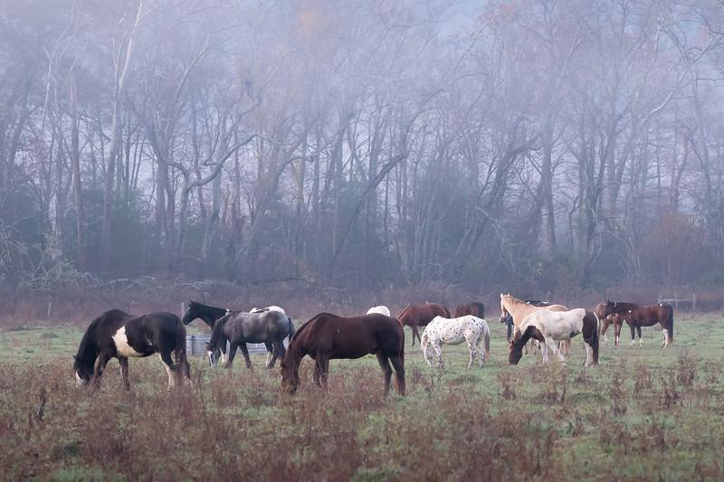 Horses at Cades Cove Riding Stables