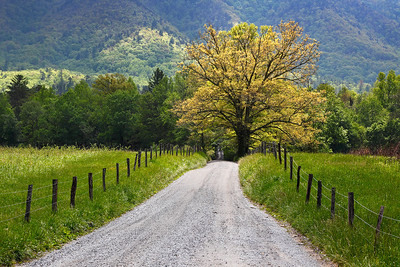 Spring Glow - Sparks Lane (Cades Cove - Great Smoky Mountains National Park)