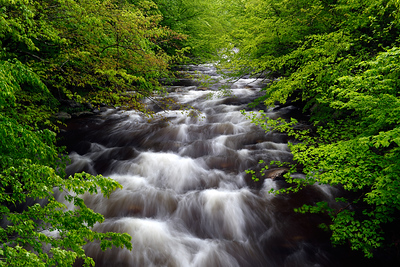 Rapid Rush - Middle Prong Little River (Tremont Area - Great Smoky Mountains National Park)