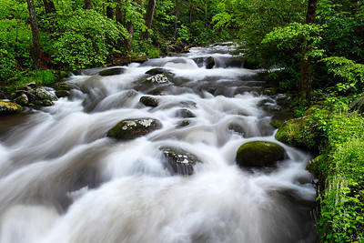 Spring Tumble  - Roaring Fork Motor Trail (Great Smoky Mountains National Park)
