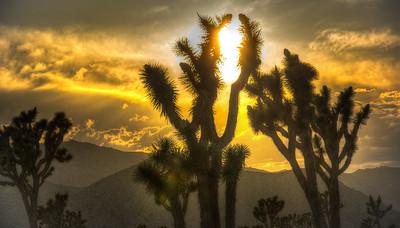 joshua-tree-silhouette-sun