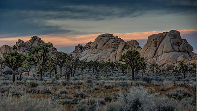 joshua-trees-rocks-evening