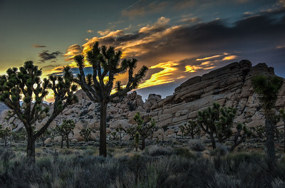 joshua-tree-sunset-2