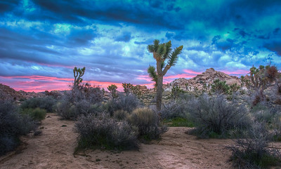 pink-sunrise-joshua-tree