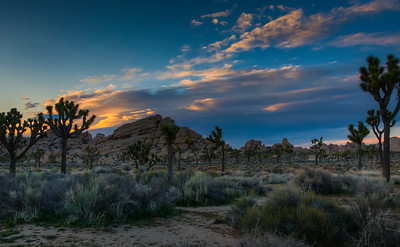 joshua-tree-color-2