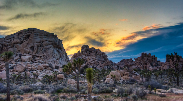 joshua-trees-rocks-sunset-2