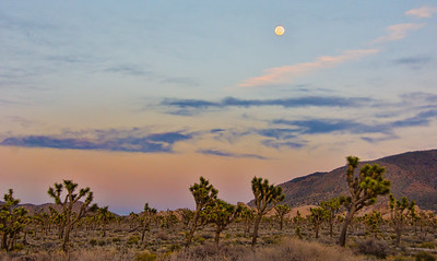 full-moon-joshua-trees