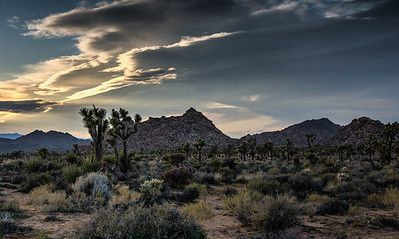 joshua-tree-evening-clouds