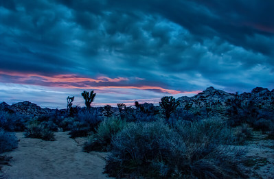 joshua-tree-pink-sunrise