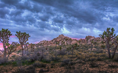 stormy-sunrise-joshua-tree